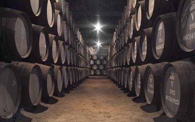 Novo projecto de formação na área dos vinhos